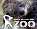 Visit the Roger Williams Park Zoo